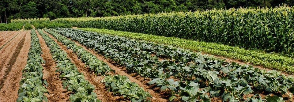 farm share in connecticut