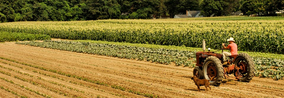 the fields at robert treat farm in milford ct local farmer