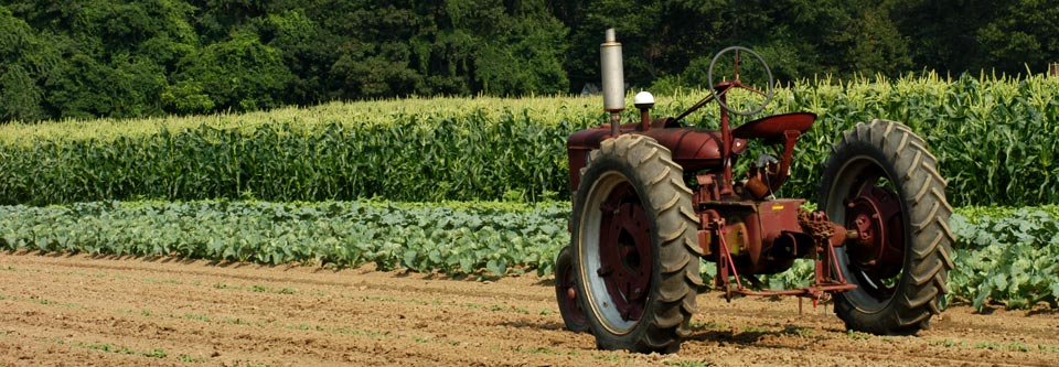 csa program locally grown corn