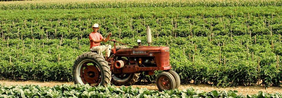 locally grown in milford ct csa farm share program