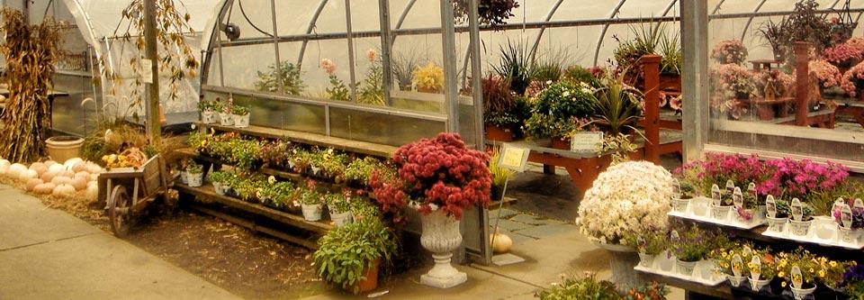 garden center 5